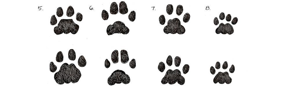 Tracce di animali - impronte di felini