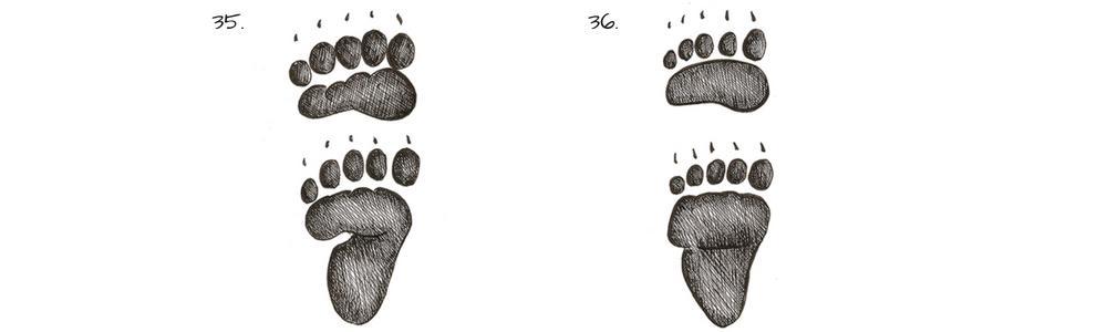 Tracce di animali - impronte di orso