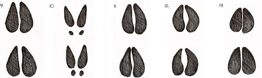 Tracce di animali - impronte di ungulati